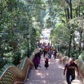 Aufstieg zum Wat Phra That Doi Suthep (Thront über der Stadt)