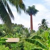 Große Palmen