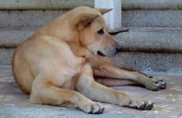überall freundliche Hunde