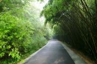 Wunderschöne Weg führen durch den Park. Der Bambus spendet Schatten.