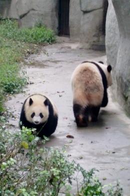 Mama, ich bin schon selbständig und gehe in die andere Richtung.