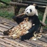 Das zwanzigste Stöckchen mundet auch noch, vor allem wenn man sich dabei in Ruhe die vielen Zuschauer ansehen kann. Panda TV sozusagen.