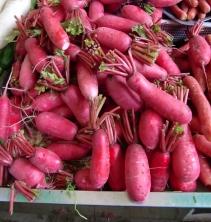 Aber auch bekannte Gemüse findet man immer wieder. Die Radieschen schmecken ganz hervorragend und sind im Vergleich zu den Deutschen runden Exemplaren wirklich riesig.