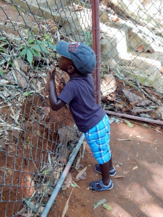 Gibbon Rehabilitation Project auf Phuket, wo ist denn der Affe?