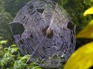 Wunderschönes Spinnennetz am Weg