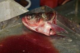 Vom Fisch und Fleisch wird jedes Teil verwertet. Das ist kein Abfall!