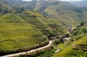 Reisterrassen auf jedem Hügel.