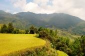 Vorbei an den goldschimmernden Reisfeldern.