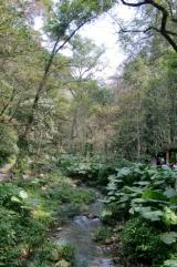 Der Weg führt durch den Wald.