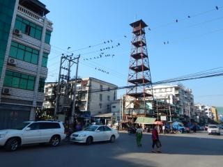 Auf den Stromleitungen zum Feuerturm tummeln sich die Tauben.