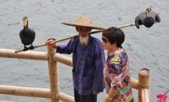 Der Kormoranfischer der alten Garde. Für Chinesen ein beliebtes Fotomotiv.