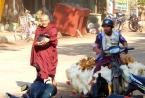 Mönche gehören in Myanmar zum Straßenbild. Genauso der Hühnchenverkäufer. Sie hängen lebend am Moped. Nur so bleiben sie frisch.