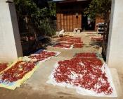 Chilis werden in der Sonne getrocknet.