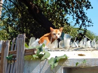 Eine Katze lugt über den mit Glasscherben bestückten Zaun.