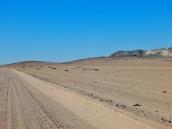 Der Welwitschia Drive, überall am Weg sieht man die Welwitschia.