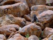 Affen beobachten uns neugierig.