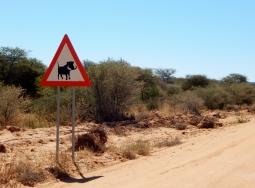 Warzenschweine sah man immer wieder an der Straße. Das Schild hatte also seine Berechtigung.