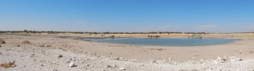 Der Etosha Nationalpark mit seiner riesigen (meist) trockenen Pfanne ist in Namibia ein Muss. Daher gibt es künstliche Wasserlöcher, wo sich die Tiere in der Trockenzeit sammeln. Gut für die Besucher.