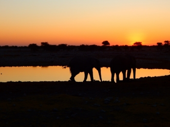 Elefanten am Wasserloch.