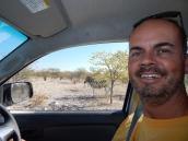Schön im Auto bleiben. Zebras sind beliebte Beutetiere für Löwen.