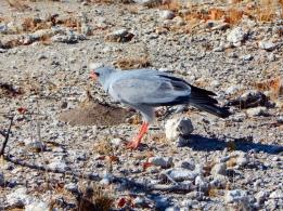 Greifvögel halten nach kleinen Tieren Ausschau.