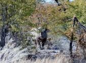 Glück gehabt, wieder ein Nashorn. Da Nashörner sehr scheu sind freut man sich besonders über eine Sichtung.
