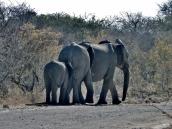 Familie Elefant.