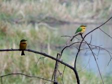 Bunte Vögel immer wieder schön anzuschauen.