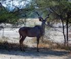 Herr Kudu.