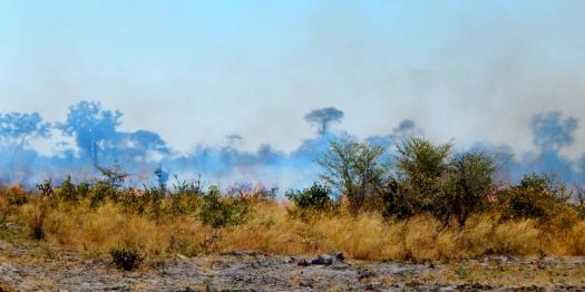 Buschbrände sieht man sehr häufig. Sind aber ungefährlich, da nur das trockene Gras brennt. Der Brand ist meistens schnell vorbei.