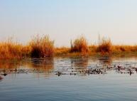 Chobe River. Die Bootsfahrt zum Sonnenuntergang unvergessen.