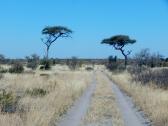 Weiter geht es in die Zentral Kalahari.