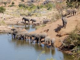 Elefantenherde im Krüger Nationalpark