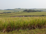 Jetzt beginnen die Zuckerrohrfelder.