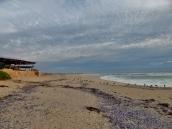 Der Strand gehört den Möwen.