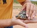 Auf dem Weg nach Norden begegneten uns immer wieder kleine Landschildkröten auf der Straße. Schnell mal ausgestiegen und über die Straße gebracht.