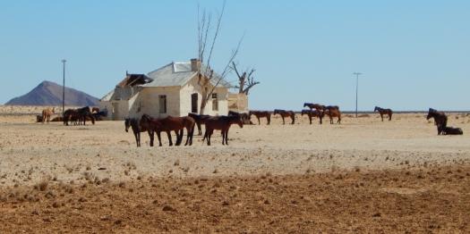 Der Weg führt nach Lüderitz. Vorbei an Wildpferden.