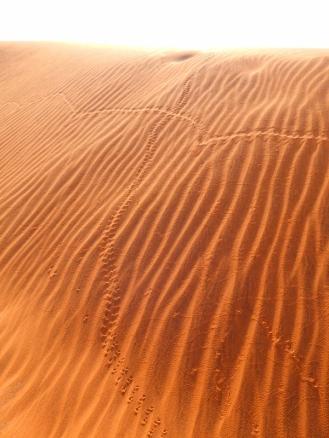 Spuren im Sand. Neben abgestorbenen Bäumen gibt es durchaus noch Leben in Form von Pflanzen und Tieren im Sossusvlei. Neben Schlangen, Geckos, Vögeln und Antilopen findet man auch Akazien und Gräser in dieser Gegend.