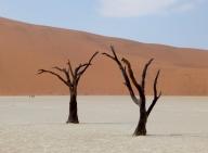 Die Bäume hatten sich perfekt der Wüste angepasst. Jetzt haben sie den Kampf verloren.