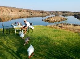 Wunderschöner über einem See gelegener Zeltplatz mit hungrigen Gänsen.