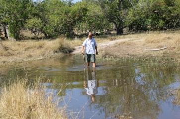 Sand ist schon eine echte Herausforderung, aber Wasser ist noch schwerer einzuschätzen. Der mit den längsten Beinen muss die Tiefe und den Untergrund testen. Aber Vorsicht vor Krokodilen und Flusspferden.