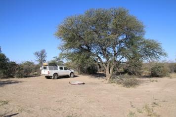 Auch ein schattenspendender Baum steht immer in der Nähe.